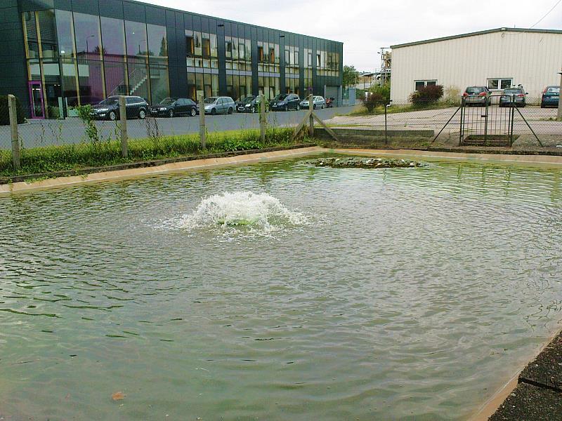teichanlagenbau dresden gartenteiche schwimmteiche koiteiche, Garten seite
